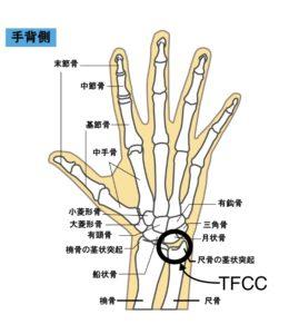 tfccの位置