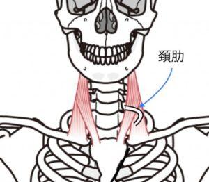 頚肋イメージ