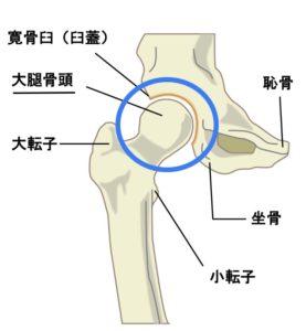 大腿骨頭イメージ