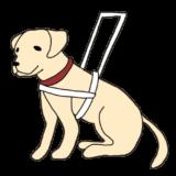 盲導犬に優しさを。信号無視の重大性と反省点。
